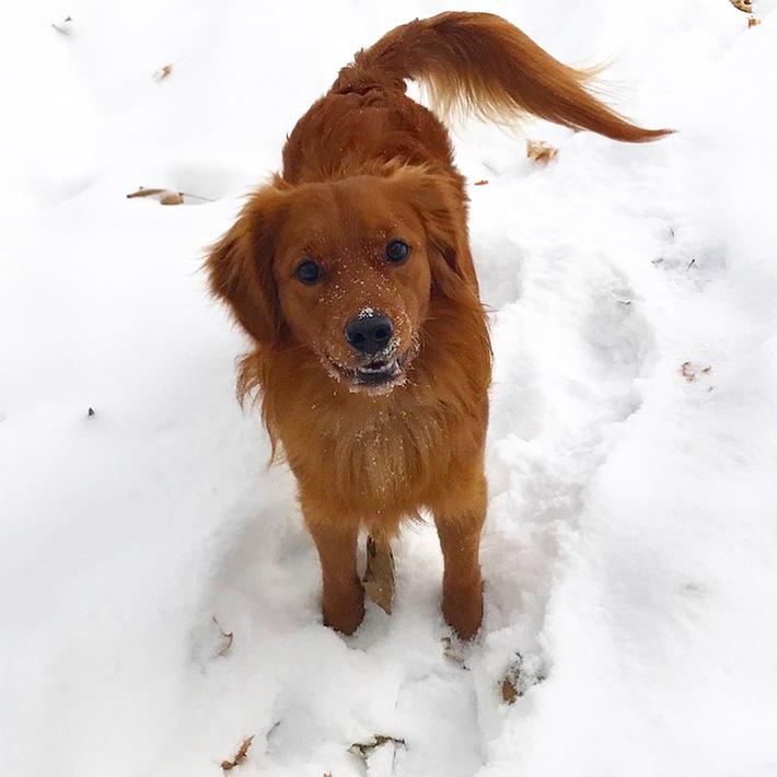 Clark en la nieve