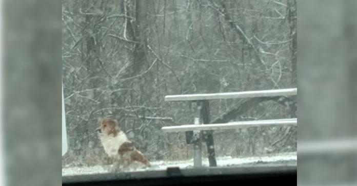 Collie abandonada en el parque esperaba a su familia