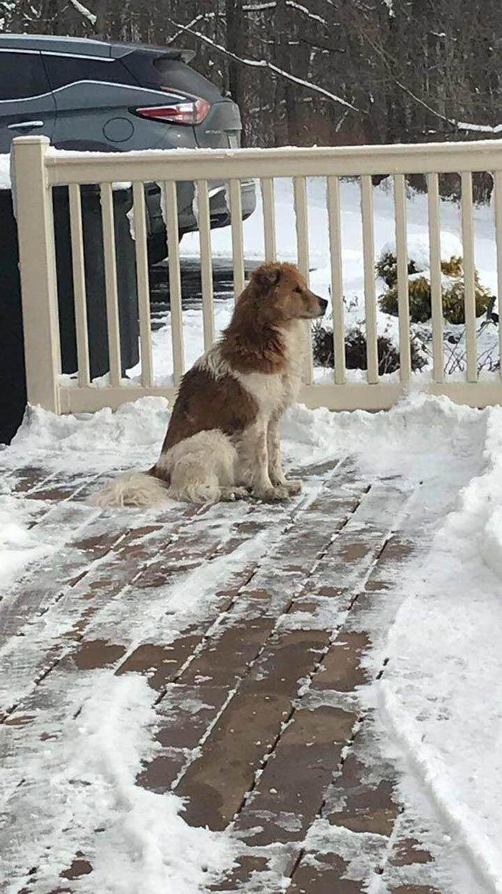 Collie espera a su familia