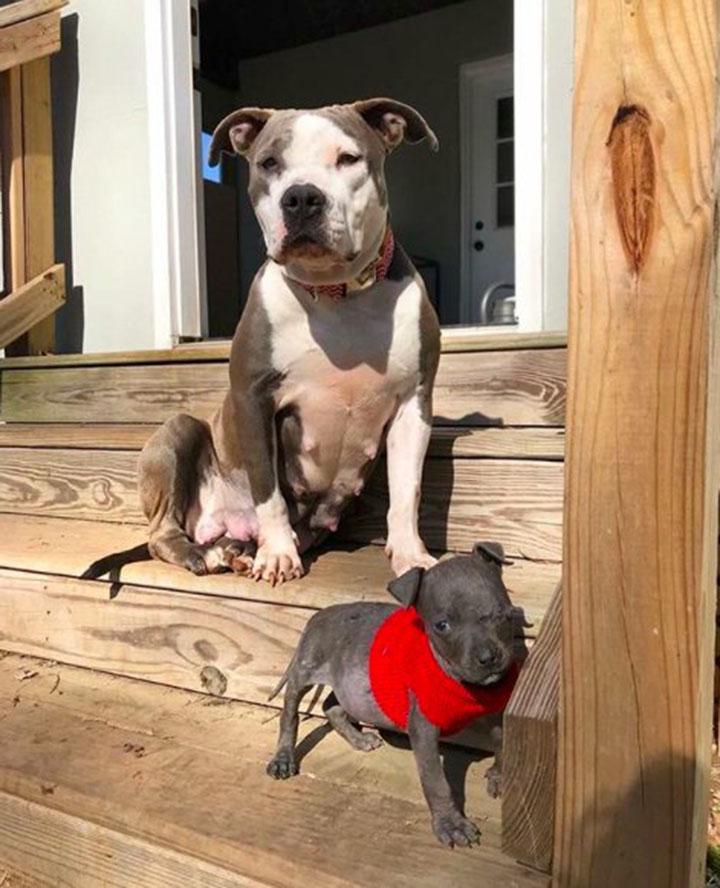 Daya y su perrito adoptado