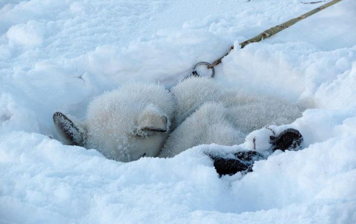Dejan a sus perros en el frío para que se congelen hasta morir