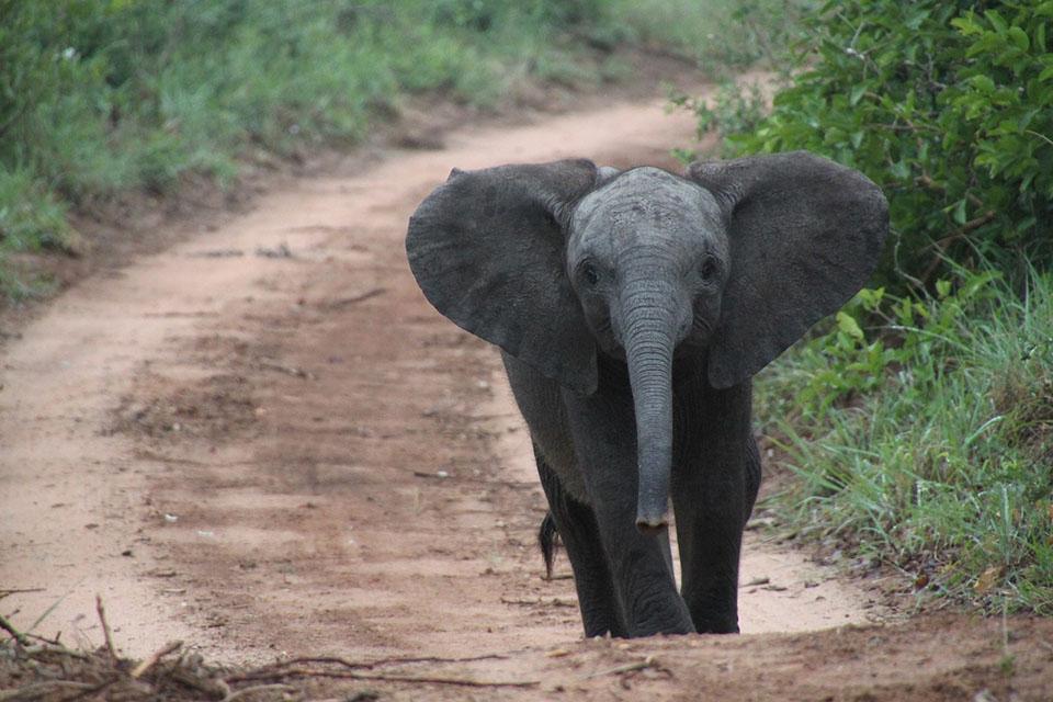 Elefante bebé