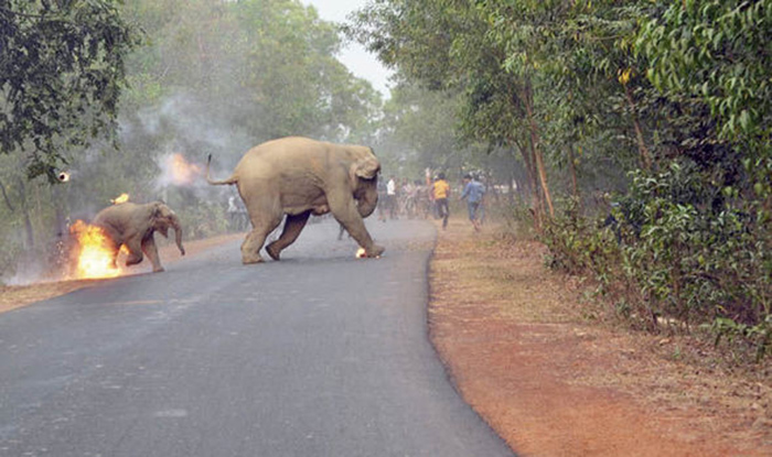 Elefantes huyen