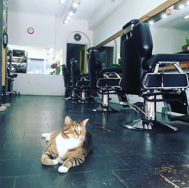 Gato en el salon