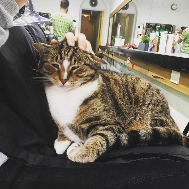 Gato recibe cariño