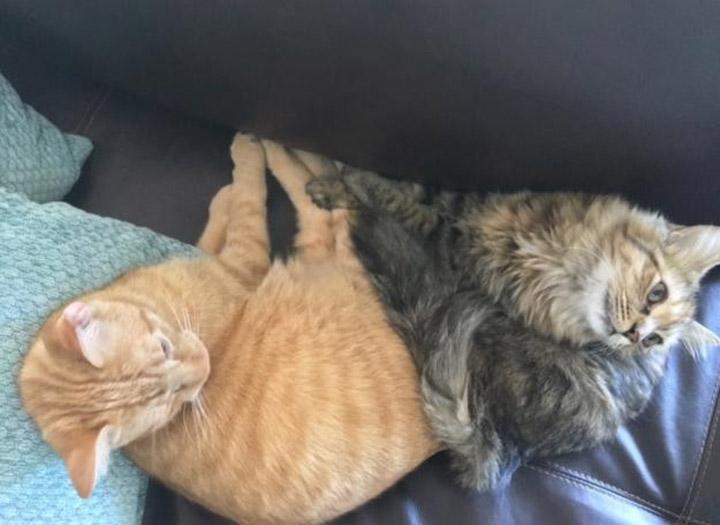 Gatos adoptados del refugio