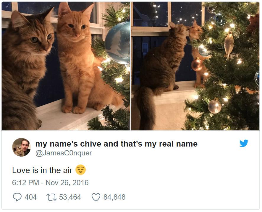 Gatos adoptados