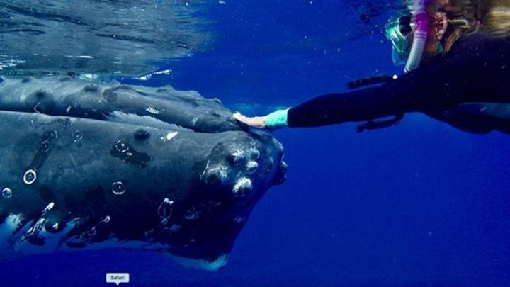 Hauser y la ballena