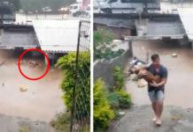 Hombre salva perro de casa inundada en Brasil