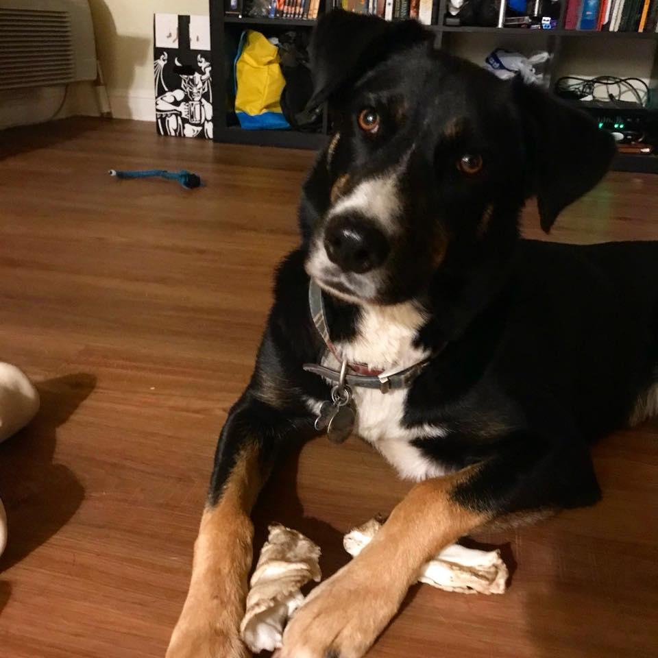 Lilly adoptada