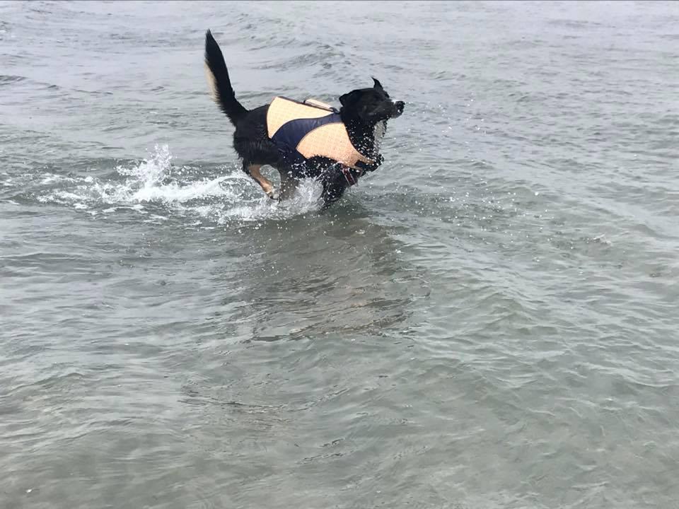 Lilly en el agua