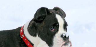 Los mejores collares para perros