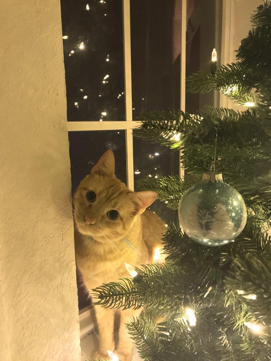 Louie gato