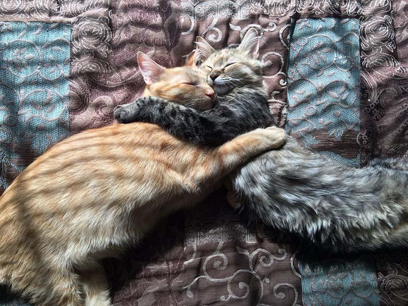 Louie y Luna