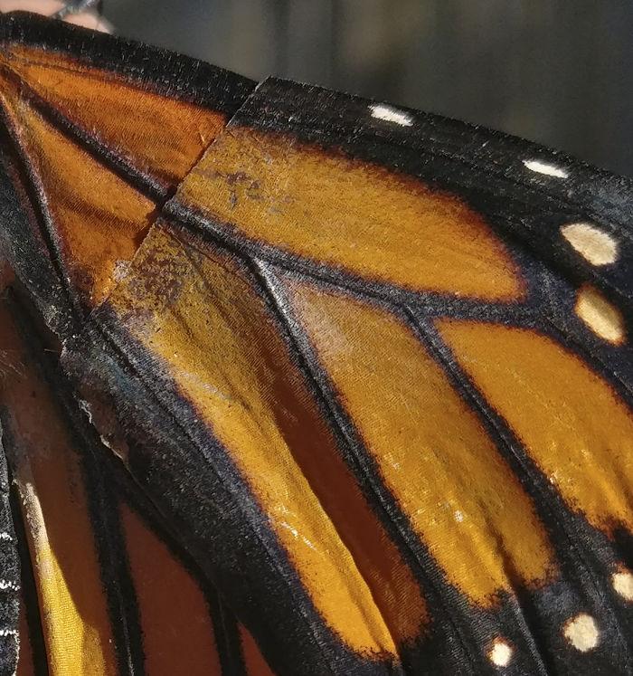 Mariposa con nueva ala