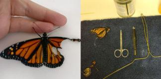 Mujer ayuda a mariposa monarca con el ala rota