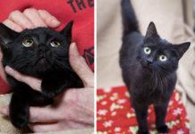 No adoptan gatos negros porque no salen bien en las selfies