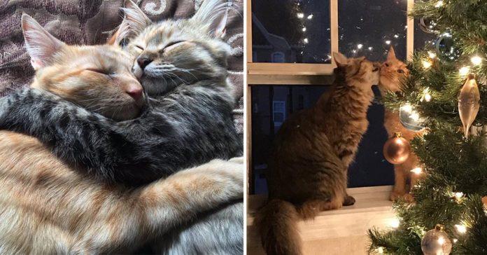 Pareja fue a adoptar a una gatita en el refugio y ella no quería dejar a su mejor amigo