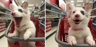 Perrito va al supermercado y tiene el mejor día