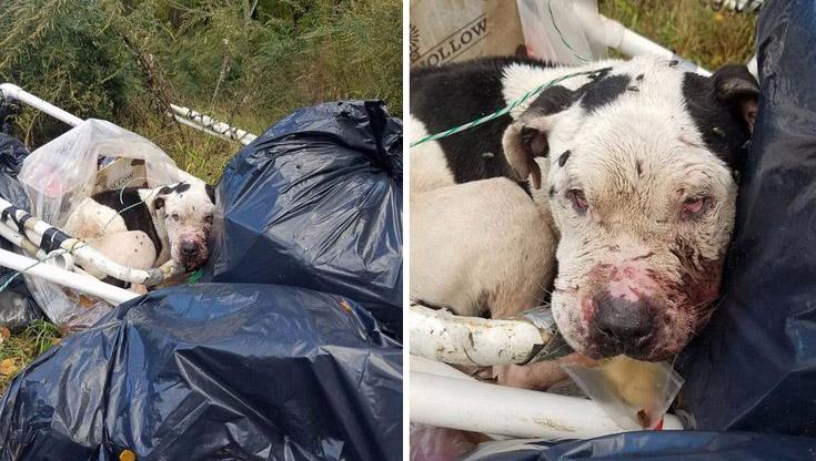 Perro abandonado atado al contenedor de basura