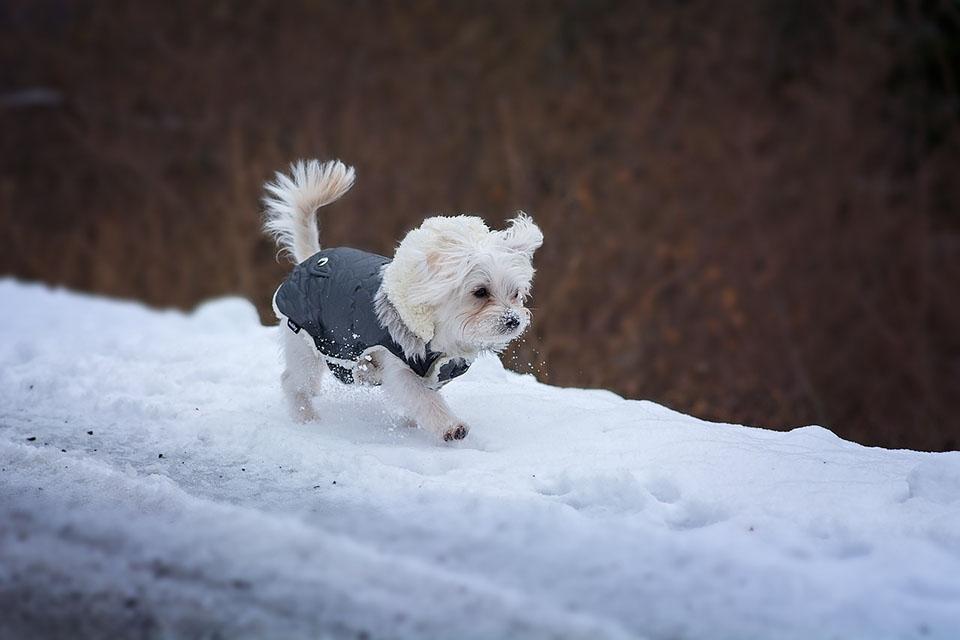 Perro camina en la nieve