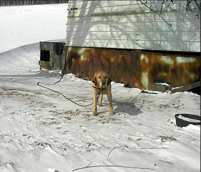 Perro en el frío