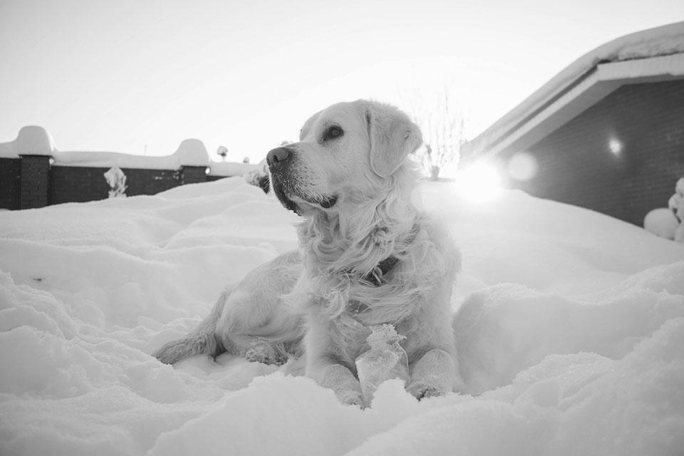 Perro en la nieve