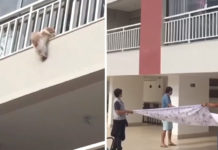 Perro se asusta con el ruido de la pólvora y cae del cuarto piso