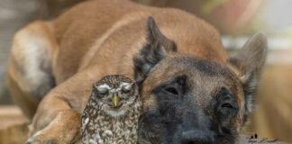 Perro y un búho comparten hermosa amistad