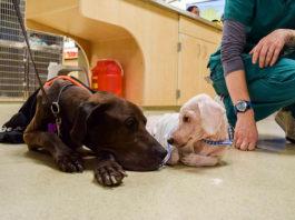 Perros hambrientos abandonados se rehúsan a separarse
