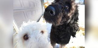 Perros salvan abuelita de morir congelada