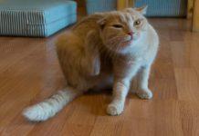 Notas de mascotas noticias curiosidades y humor animal - Como saber si tengo pulgas en casa ...