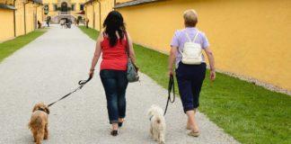 como pasear a tu perro