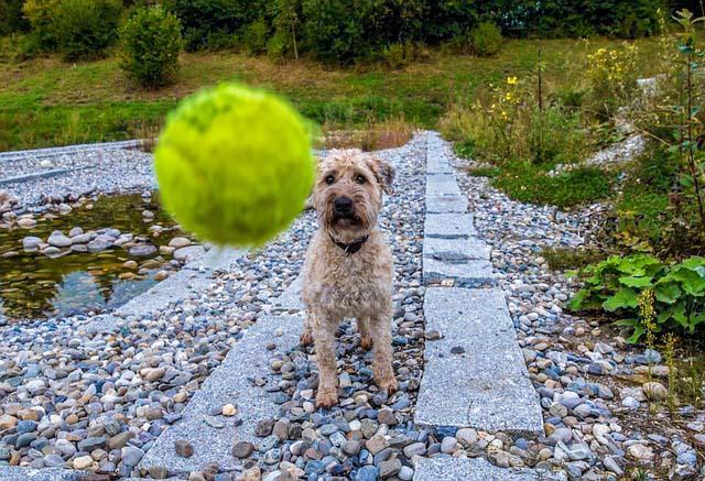 juega con tu perro durante el paseo