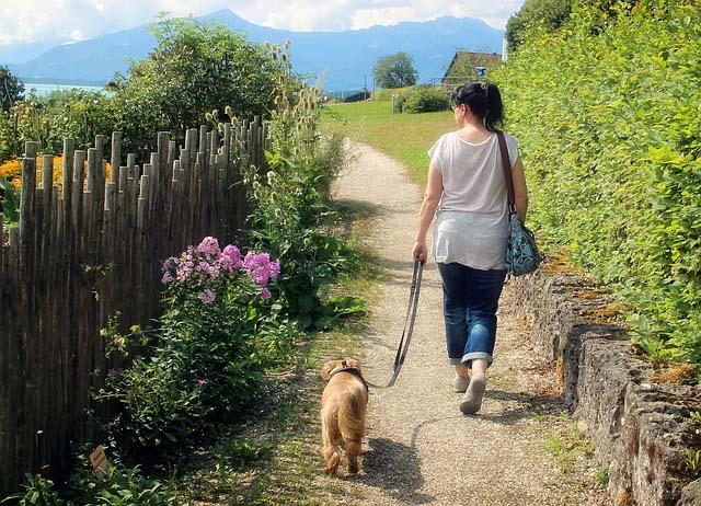 pasear a tu perro debe ser una actividad relajante para ambos