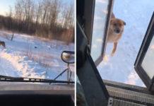 Conductor para autobús para alimentar a un perro