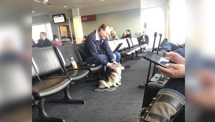 Corgi consuela extraño en aeropuerto