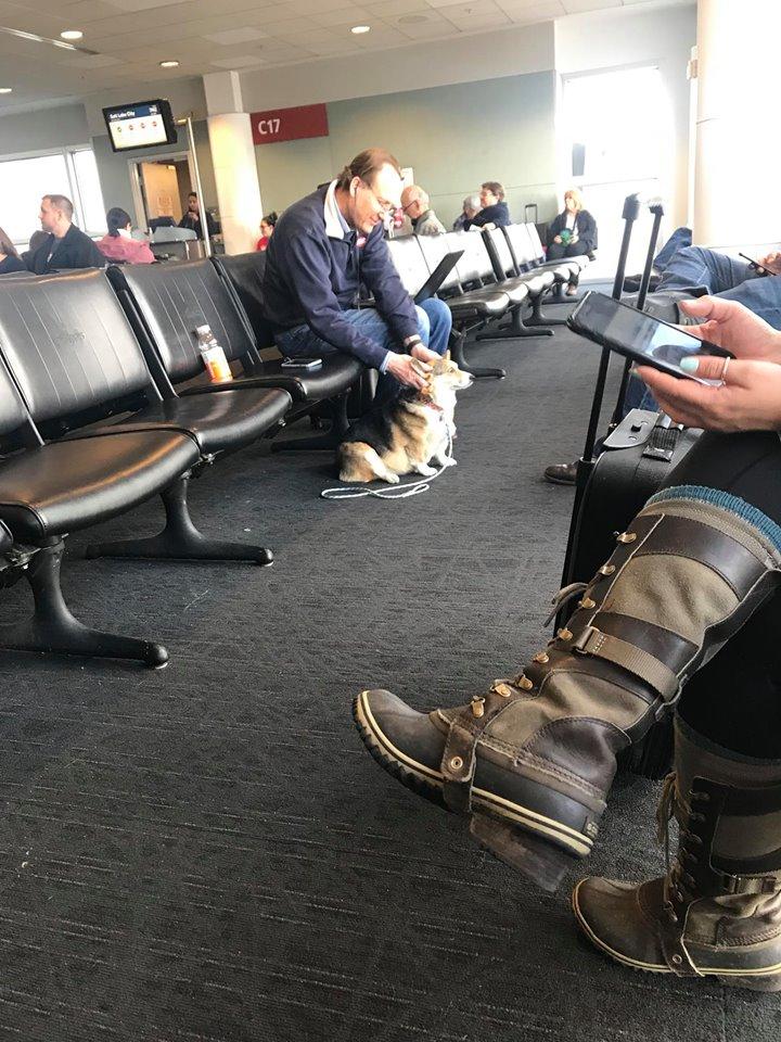 Corgi en aeropuerto