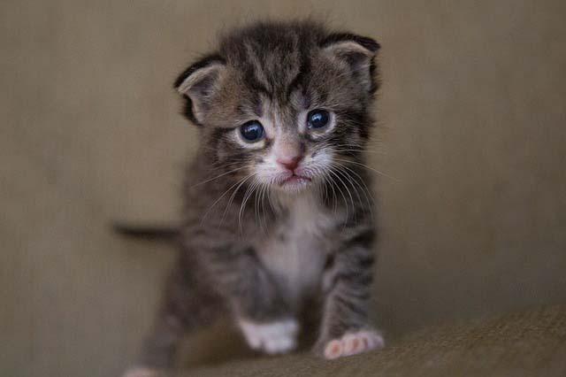 Desparasitar a un gatito