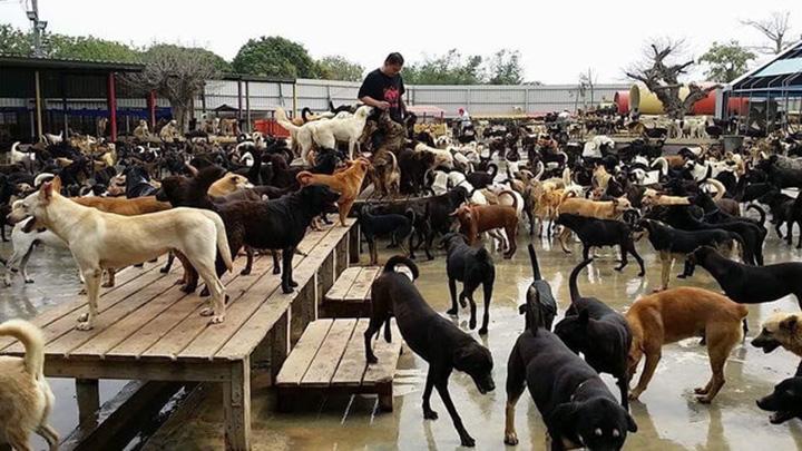 Familia cuida de 3000 perros sin hogar en Taiwan