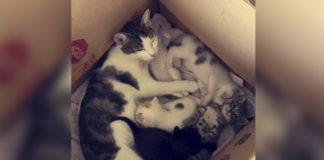 Gata irrumpe en casa de extraño para salvar a sus gatitos