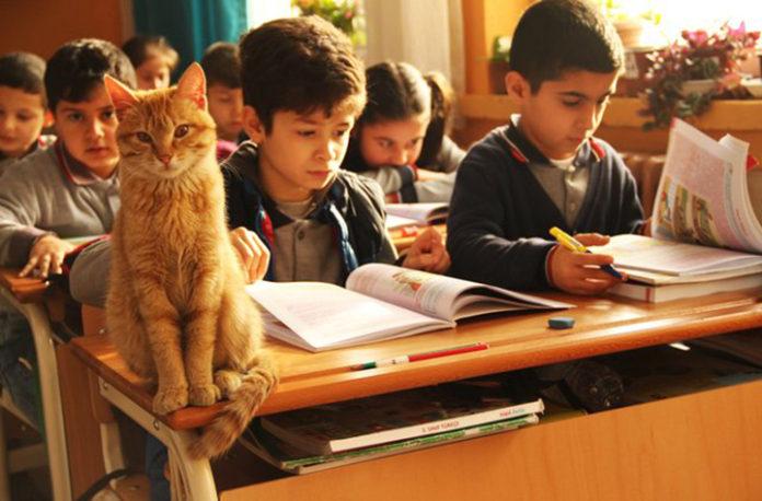 Gato entra a escuela primaria y se queda