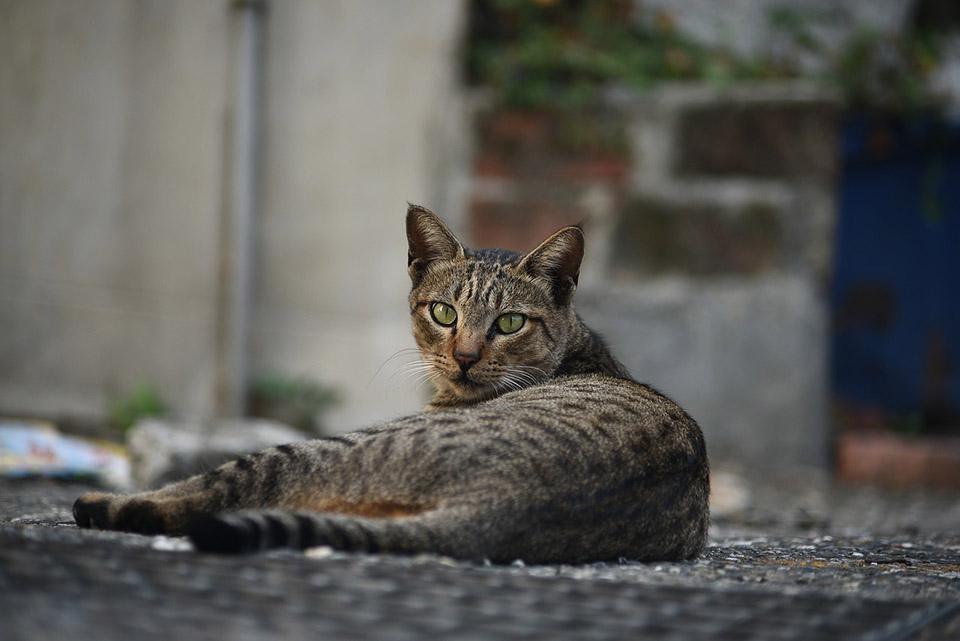 Gato sin hogar