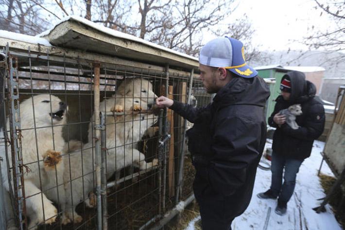 Granja de carne de perro en Corea