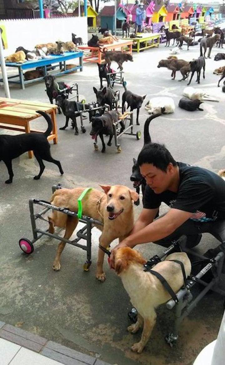 Hombre cuida perros
