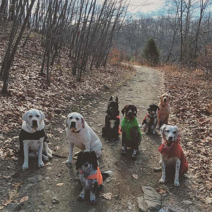 Manada de perros