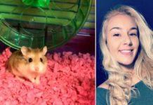 Mujer ahoga a su hamster en el inodoro del aeropuerto
