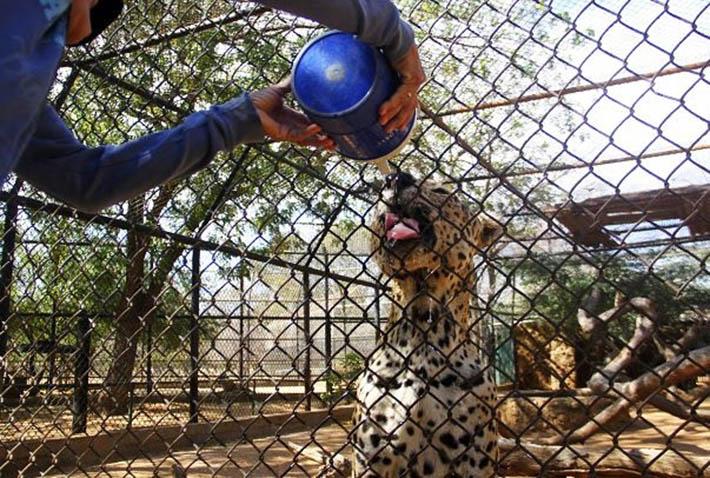 Mujer le brinda agua a jaguar