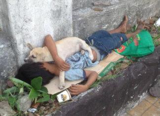 Niño adopta a perro de la calle y su amistad conmueve a todos