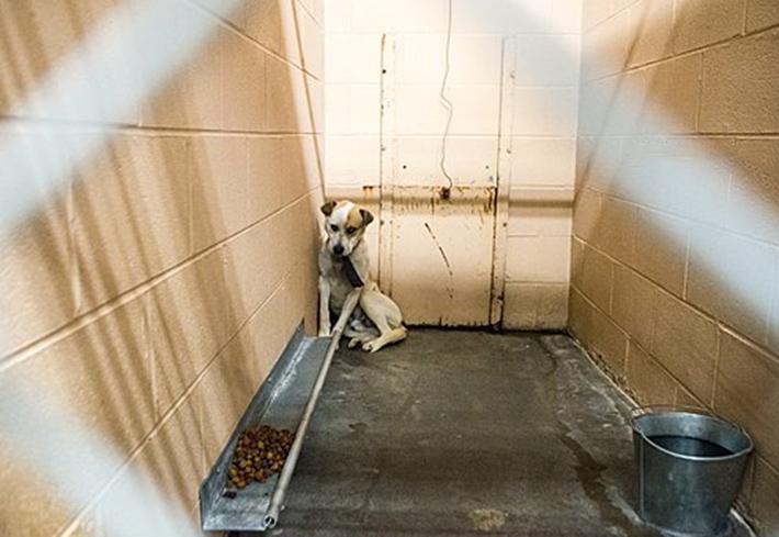 Perro asustado en el refugio